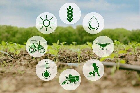 فعالیت 217 تشکل بخش کشاورزی در خراسان جنوبی برای افزایش بهره وری